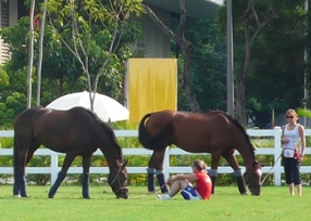 Horses relaxing after arrival into Hong Kong