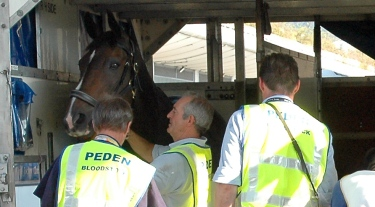 Professional Flying Grooms | Peden Bloodstock