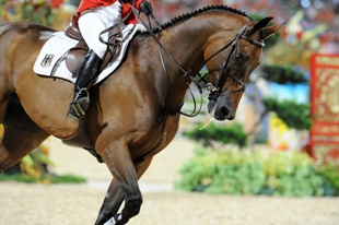 Elite Competition Horse